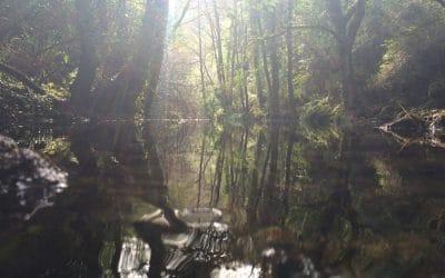 Cuando entres en un bosque. Omraam Mikhael Aivanhov