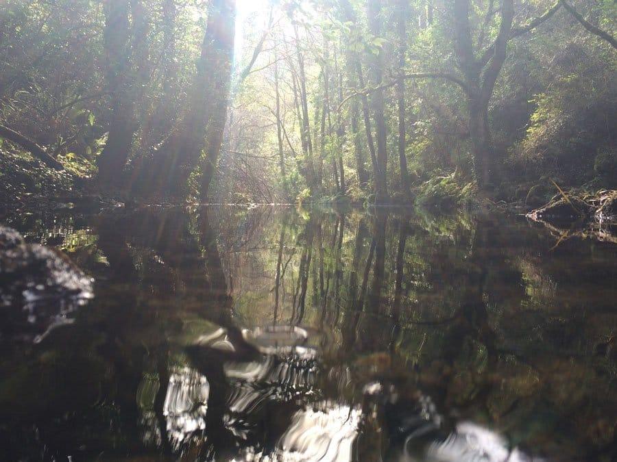 Cuando entres en un bosque. Omraam Mikhaël Aïvanhov