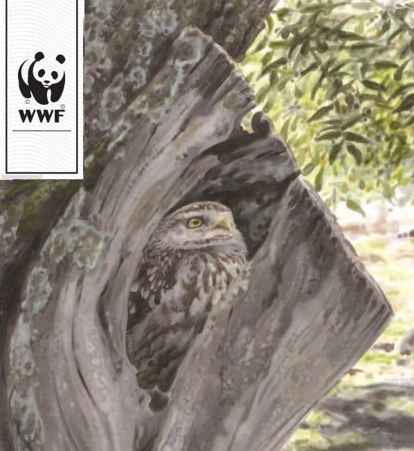 Biodiversidad en los Olivares Ecológicos