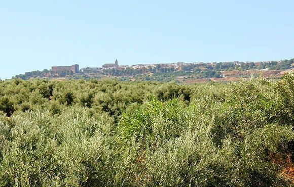 Vista de los olivares en Sabiote, Jaén.